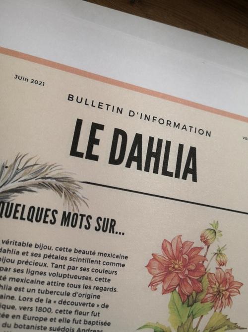 Le Dalhia