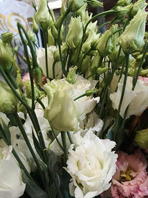 Lysianthus blanc 0