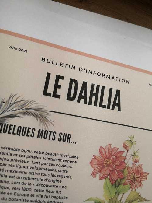 Le Dalhia 0